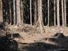 Ochrana lesa proti škůdcům